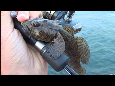 Вопрос: Что за рыба с народным названием чуларка, что о ней известно?