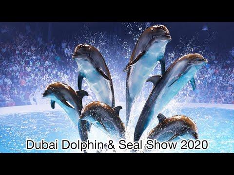 Dolphin & Seal Show | Dubai Dolphinarium | Exploring Dubai 2020