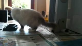 FIP Cat Mishka unwell day