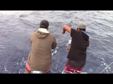 Cook Islands 2015 fishing