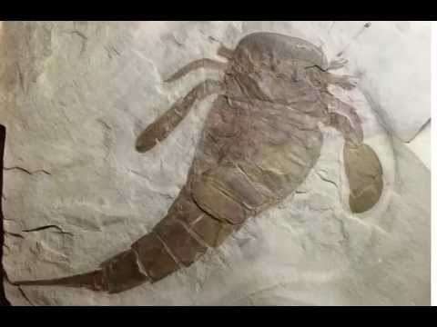 MCCBotany02: Overview of the Precambrian