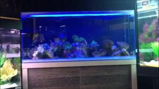 Fluval M 90 Reef Aquarium At Aquahome Aquatic Centre Leyland