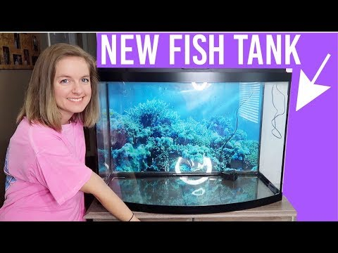 Cleaning My New Fish Tank