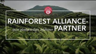 Rainforest Alliance – unser erfahrener Partner