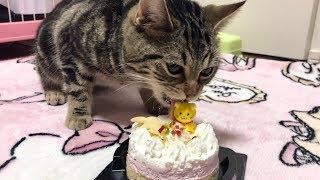 1歳の誕生日に初めてのケーキを大食いしてしまう猫w