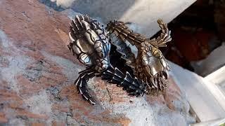 Ящерица дракон змея уроборос фото