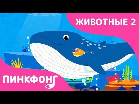 Синий Кит — Плывёт Синий Кит   Песни про Животных   Пинкфонг Песни для Детей