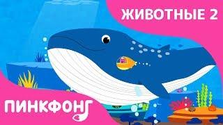 Синий Кит — Плывёт Синий Кит | Песни про Животных | Пинкфонг Песни для Детей