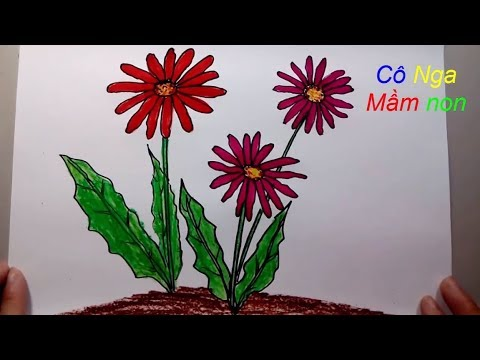Vẽ hoa đồng tiền – hoa domg tien- How to draw flowers