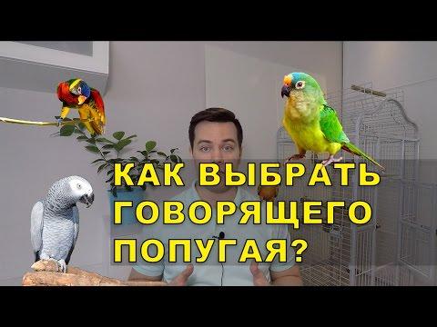 Как выбрать говорящего попугая - 3 простых правила.