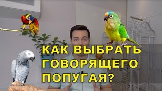 Как выбрать говорящего попугая 3 простых правила