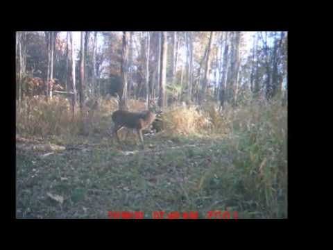North Carolina Hunting & Wilderness Outfitters