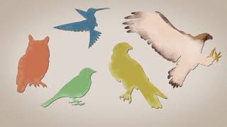 Nature Talks: Evolution of Birds