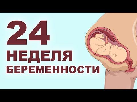 Что происходит с мамой и ребенком на 24 неделе беременности?