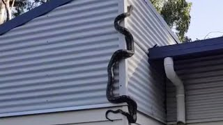 Australian man films 9-foot python on his house