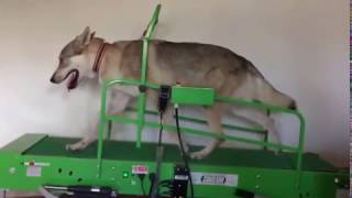 Arimminum Cairo su Starker Hund