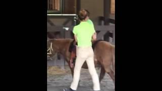 Pony ride turtle back 5/26/16