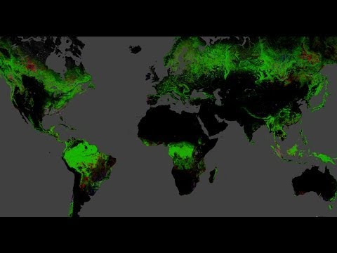 [LIVE] Mapping Global Forest Change: Discussion, Demonstration, live Q&A