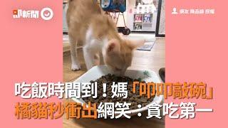 吃飯時間到!媽「叩叩敲碗」 橘貓秒衝出網笑:貪吃第一