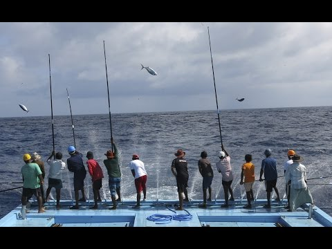 Pole-and-Line Fishing In Action, Maldives 2014
