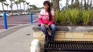Deaf Dog Training Removing The Handicap Using Remote Pager/vibration Collar