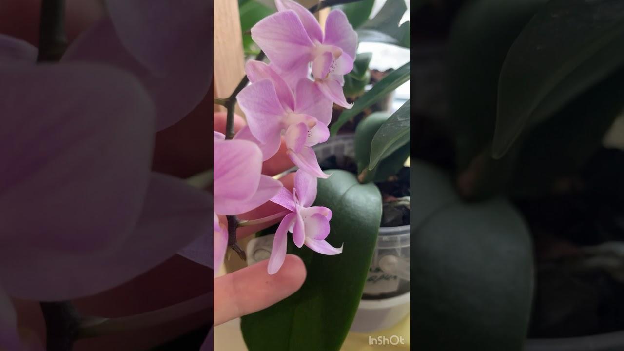 Обзор цветущих орхидей.