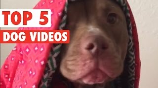 Top 5 Amazing Dogs Compilation || March 4 2016