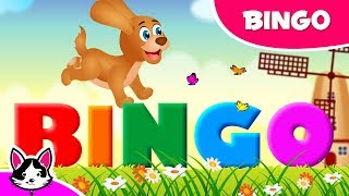 Bingo Dog Song | Cartoon Animation Kids Nursery Rhymes | Hetty Kitten