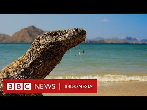 Haruskah Pulau Komodo Ditutup Dan Dibiarkan Tanpa Manusia? - BBC News Indonesia