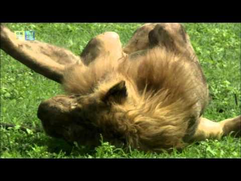 Ngorongoro Conservation Area (UNESCO/TBS)