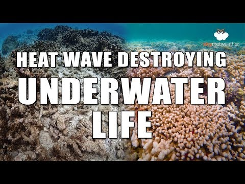 Heat wave destroying marine life; major threat to humanity | Skymet Weather
