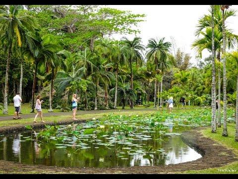 Pamplemousses Botanical Garden, in Mauritius