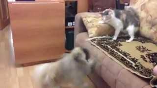 Битва домашних животных