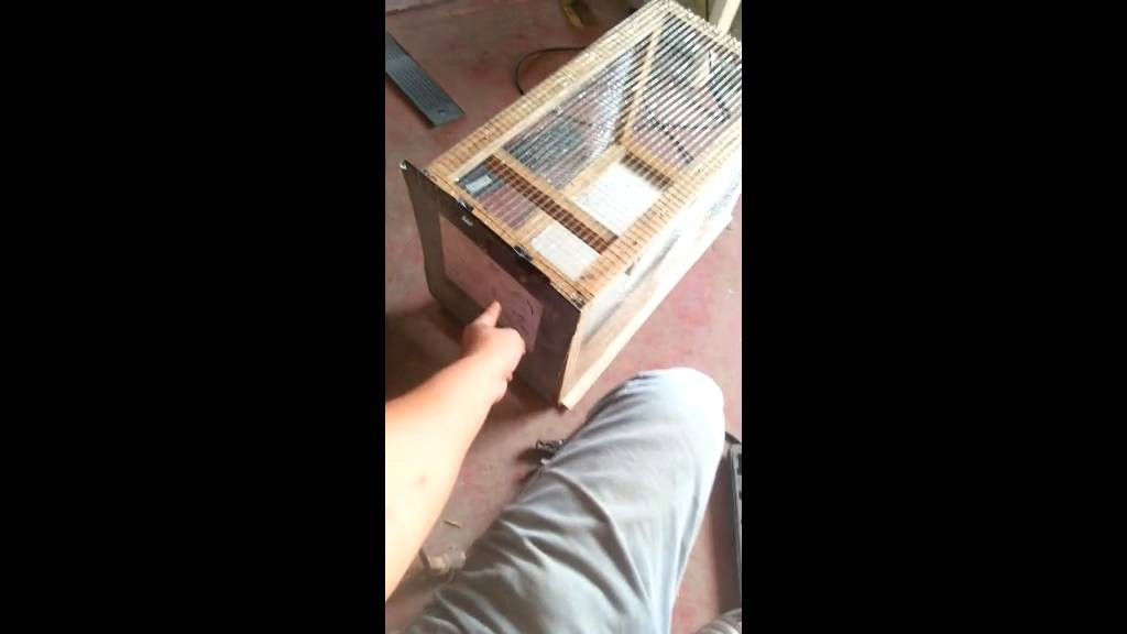 Como hacer trampa para ratas youtube - Construir trampa para ratas ...