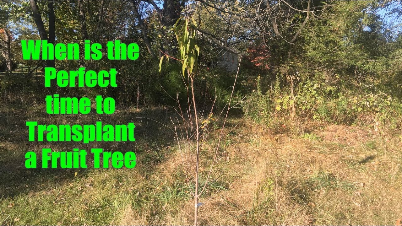 Best Time To Transplant Fruit Trees