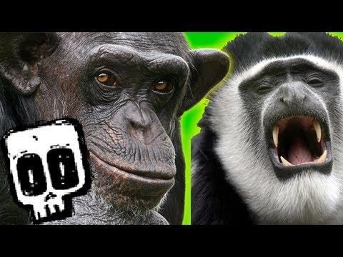 Chimps vs Colobus | Deadliest Showdowns (Ep 5) | Earth Unplugged