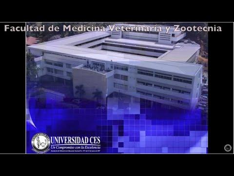 PDF EXPLORADORA LAPAROTOMIA DE TECNICA QUIRURGICA