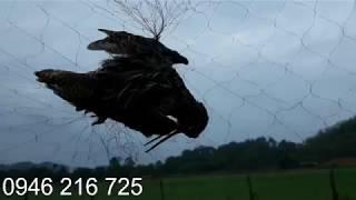 Lưới bẫy chim đêm