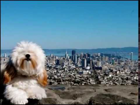 SAN FRANCISCO - Top Tourist Attractions, Travel Guide