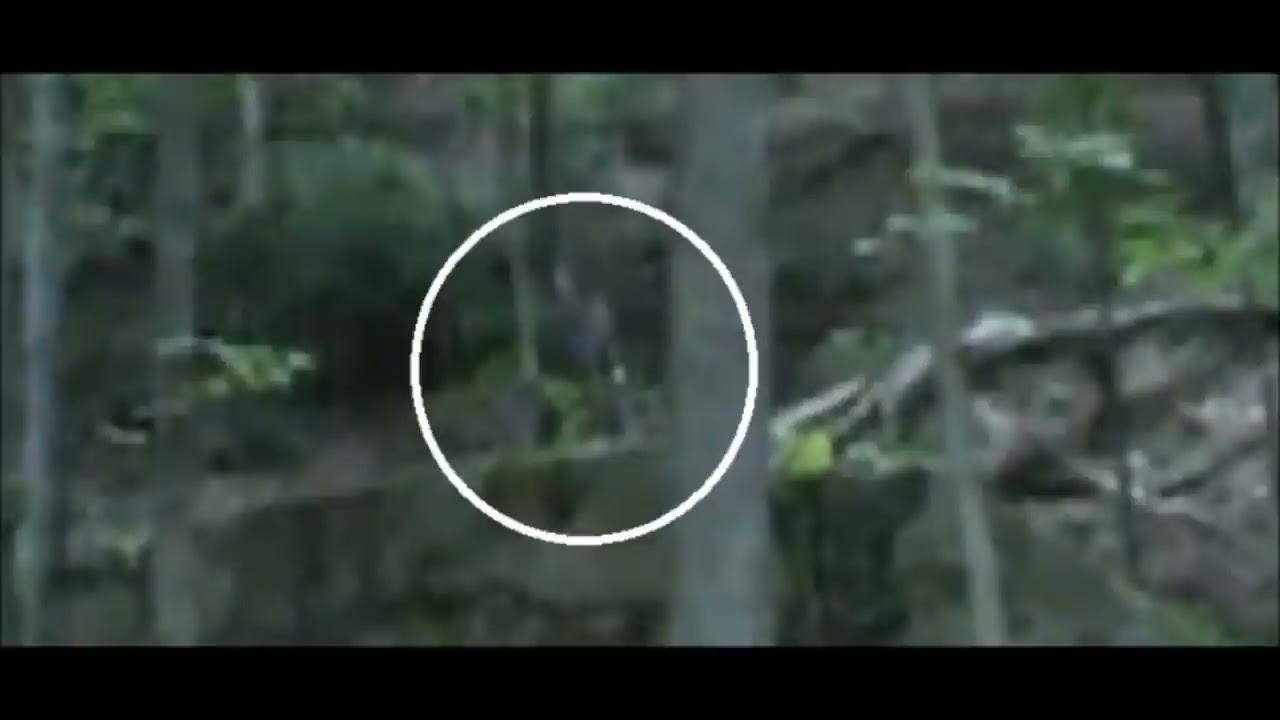 six seconds of ohio grassman finding bigfoot youtube