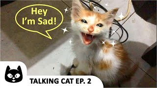 (Talking Cat Ep 2) Kitty Is Sad And Crying!