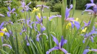 ФУТАЖ Летние цветы(ФУТАЖ Летние цветы. Скачать видео можно бесплатно!, 2016-06-12T16:54:47.000Z)