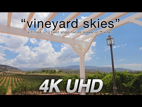 """Vineyard Skies"" 4K UHD 1 HR Winery Nature Relaxation™ Video - Real Time"
