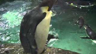 2015/07/20 アドベンチャーワールド 海獣館.
