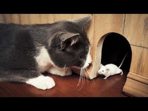 Как научить КОТА ловить мышей!?!