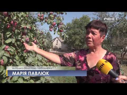 TVRivne1 / Рівне 1: Все у білому нальоті: в Рівненському районі люди потерпають від роботи підприємства