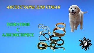 Аксессуары для собак. Покупки с Aliexpress / Алиэкспресс
