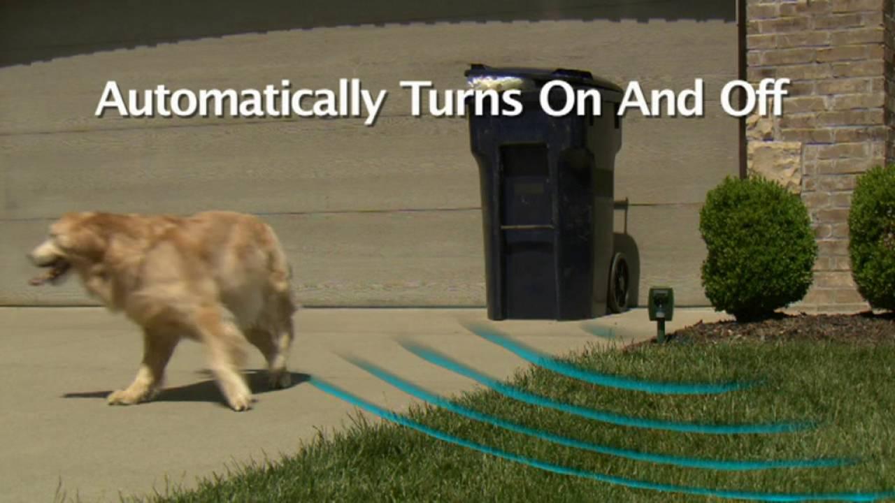 24studio Zonar Animal Repeller Youtube Solar Powered Scarer