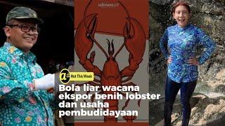 Polemik wacana ekspor dan pembudidayaan benih lobster