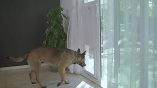 the patio pet door insert by high tech pet products